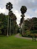Palmsteeg in het Park royalty-vrije stock foto's