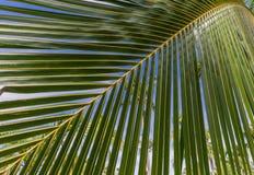 Palmtak stock afbeelding