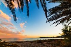 Palmtakken door de kust in Sardinige stock foto's