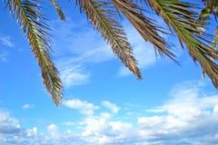 Palmtakken onder een blauwe hemel royalty-vrije stock fotografie