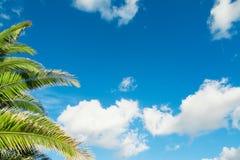 Palmtakken onder een blauwe hemel Stock Afbeeldingen