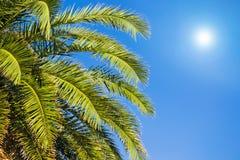 Palmtakken onder een blauwe hemel royalty-vrije stock afbeelding