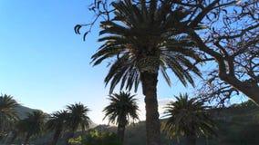 Palmtakken in zon Rust op een zonnig eiland onder palmen Reisreis Het concept een goede stemming van het reizen stock videobeelden