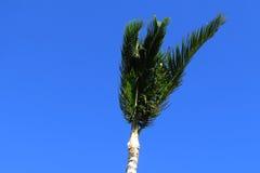 Palmträdöverkant Royaltyfri Fotografi