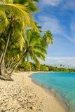 Palmträd över den tropiska lagun på Fiji Royaltyfri Fotografi