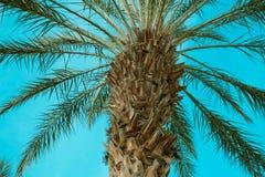 Palmträd över himmelbakgrund Arkivbilder