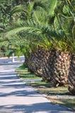 palmträd Arkivbild