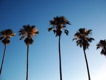 palmträd Royaltyfria Bilder