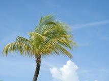 Palmträd. Royaltyfri Fotografi