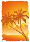 Palmträd Arkivbilder