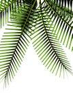palmträd stock illustrationer