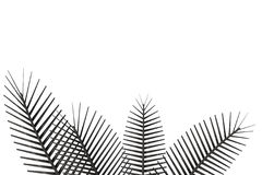 palmträd Royaltyfri Fotografi