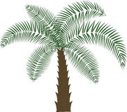 Palmträd vektor illustrationer