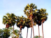 palmträd 41 royaltyfri bild