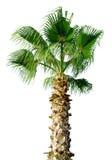 palmträd arkivfoton