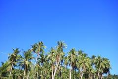 Palmträd av den tropiska ön Arkivfoto