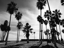 Palmträd av den venice stranden i svartvitt royaltyfria foton