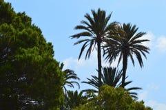 Palmträd Backlit av solen Royaltyfri Fotografi