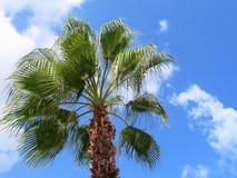 Palmträd, blå himmel och moln, Chania, Kreta fotografering för bildbyråer