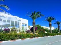 Palmträd bredvid vägen Arkivfoto