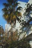 Palmträd bredvid vita lägenheter fotografering för bildbyråer