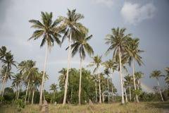 Palmträd, buskar och sandig strand med molnig himmel Royaltyfri Foto
