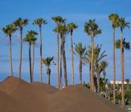 Palmträd Corralejo Arkivbild
