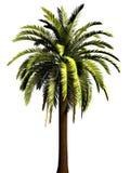 palmträd 3d Arkivfoton