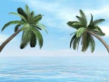 Palmträd - 3D framför stock illustrationer