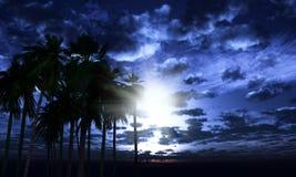 palmträd 3D mot en månbelyst himmel Royaltyfri Fotografi