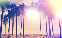 palmträd 3D och hav med tappningeffekt Royaltyfria Foton