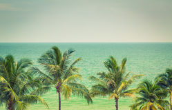 Palmträd (den filtrerade bilden bearbetade VI fotografering för bildbyråer