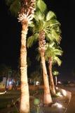 Palmträd - Egypten royaltyfri fotografi