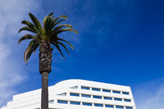 palmträd för bakgrundsbyggnadskontor Arkivfoto
