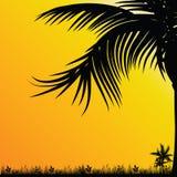 Palmträd för bakgrundssvartillustration Royaltyfria Bilder