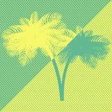 Palmträd för gul gräsplan Arkivfoton
