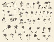 Palmträd för vektorillustrationkontur skissar royaltyfri illustrationer