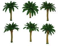 palmträd för voxel 3d Royaltyfri Fotografi