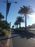 Palmträd fodrade vägen Arkivfoto