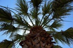 Palmträd från jordningen Fotografering för Bildbyråer