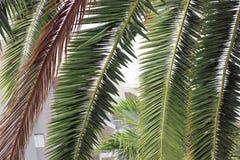 Palmträd framme av ett hotell royaltyfria foton