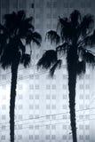 Palmträd framme av hotellet Royaltyfri Bild