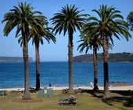 Palmträd framtill, södra huvud och norr huvud i bakgrunden Royaltyfri Bild