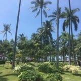 Palmträd i Bali Indonesien Arkivbilder