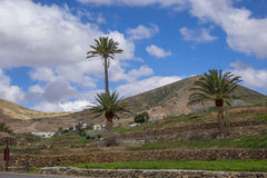 Palmträd i Betancuria Fuerteventura kanariefågelöar Las Palmas royaltyfri bild