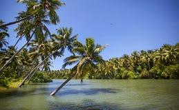 Palmträd i bevattna Royaltyfria Foton