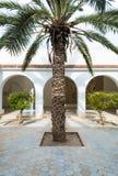 Palmträd i borggård Royaltyfria Bilder