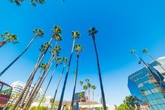 Palmträd i den Hollywood boulevarden arkivbild