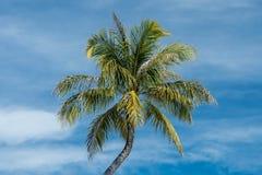 Palmträd i den molniga himlen royaltyfria foton