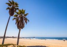 Palmträd i den Venedig stranden Royaltyfri Bild